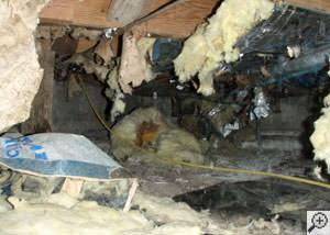 A messy crawl space filled with rotting insulation and debris in Menomonee Falls.