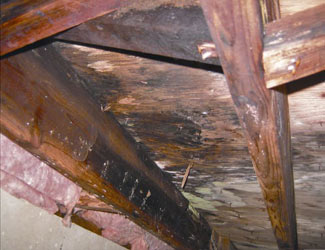 mold and rot in a Rockford crawl space